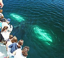 A Whale of a Tale!!!  part 1, please read in order! by Linda Jackson