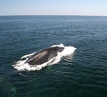 A Whale of  a Tale!  Part 3, Please read in order! by Linda Jackson