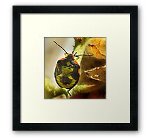 Colorful Armour Framed Print