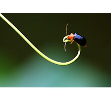 Insect 2 Photographic Print