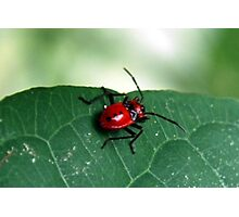 Insect 4 Photographic Print
