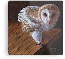 Baby Barn Owl Metal Print