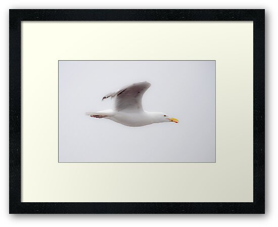Seagull In Flight by Jim Haley
