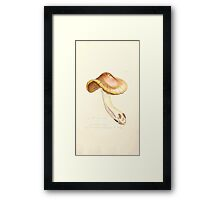 Coloured figures of English fungi or mushrooms James Sowerby 1809 1049 Framed Print
