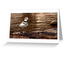 Killdeer - Shorebird Greeting Card
