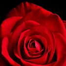 WEEKEND ROSE by RoseMarie747