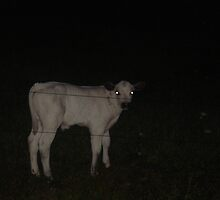 casper the calf by paige weiss