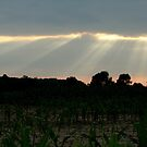 July Sunset over the Cornfield by mikrin