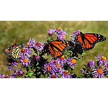 Butterfly Mania Photographic Print