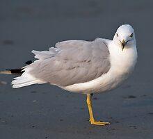 Model Seagull - Middletown, Rhode Island by Jim Haley