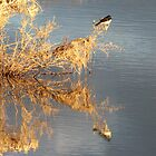 Golden Glow - Turlee Dam Mungo District by Australis