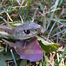 Garter Snake by Dave & Trena Puckett