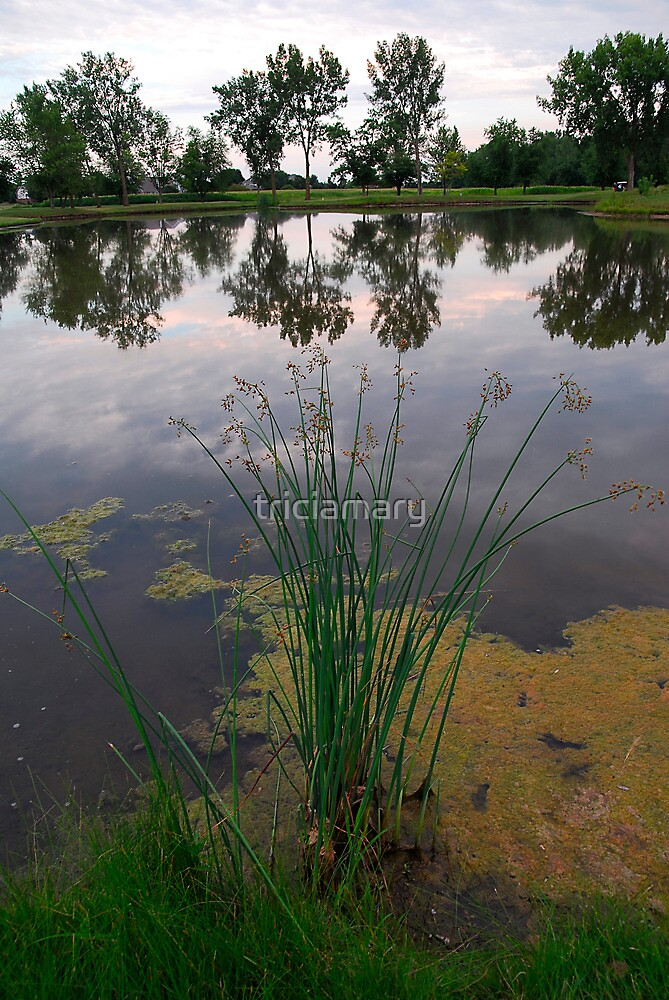 Wild onions on the lake by triciamary