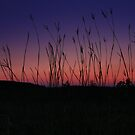 Twilight Grass by Megan Noble