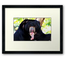 Silly Bear Framed Print