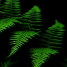 Rain Forest Fern by jojocraig