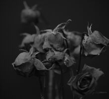 Fading roses by SolsticeSol