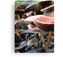 Gills and Ragged Edges Canvas Print