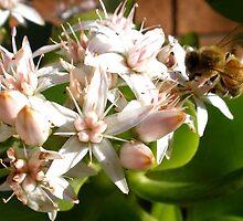 Bee & Flower by Marina Raspolich