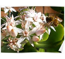 Bee & Flower Poster