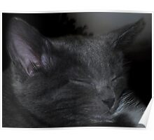 Cat Napping Poster