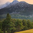 Early Morning, Mountain River, Tasmania #7 by Chris Cobern