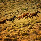 Wild horses running up ridge by socalgirl
