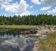 Beaver Lodge Lake by John Carpenter