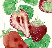 Strawberries by Gabby Malpas