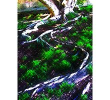 Advancing tree Photographic Print