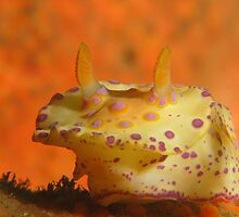 Halifax Nudi by Matt-Dowse