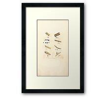 Coloured figures of English fungi or mushrooms James Sowerby 1809 1009 Framed Print