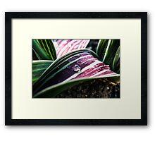 Tulip Leaf Framed Print