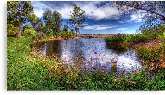 Peaceful Pond by Shannon Rogers
