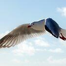 Flight by Robert Jenner