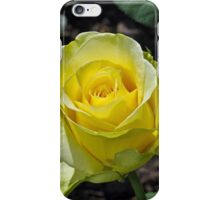 Single yellow rose iPhone Case/Skin