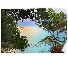 Rainforest through to the Beach Poster