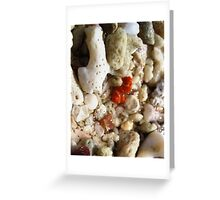 Tiny delicate orange shells Greeting Card
