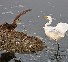 Young NIght Heron and Egret do not See Eye to Eye by Paulette1021