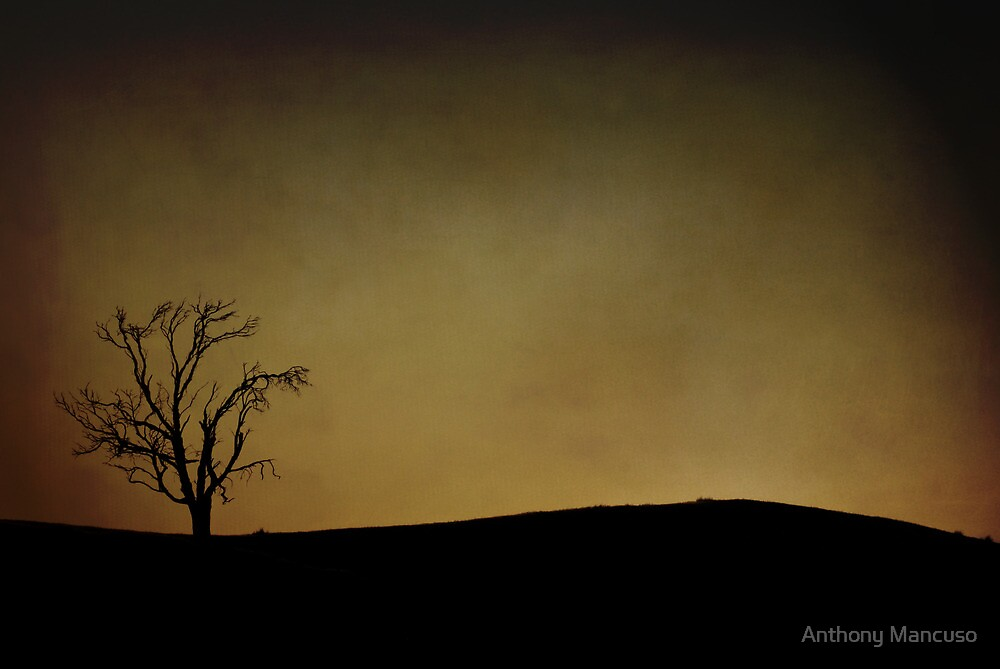 late one afternoon by Anthony Mancuso