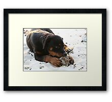 Vanuatu - The sun, the sand, the coconuts...and 4 big paws Framed Print
