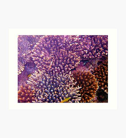Ningaloo Reef coral Art Print