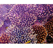Ningaloo Reef coral Photographic Print