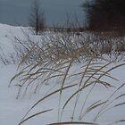 winter beach by Leeanne Middleton