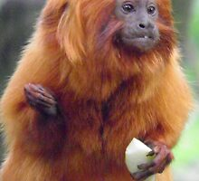 The Golden Lion Tamarin  by angeljootje