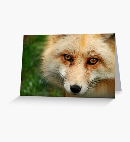 What a Fox!  Greeting Card