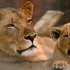 Mum and Cub by Alexa Pereira