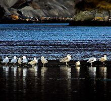 The Seagull all line up..  by Nicola  Cairns