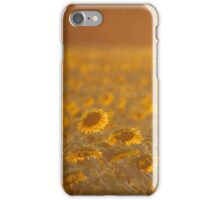 Shining Sunflowers  iPhone Case/Skin