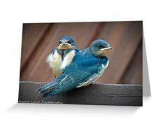 snuggling blue bridies Greeting Card
